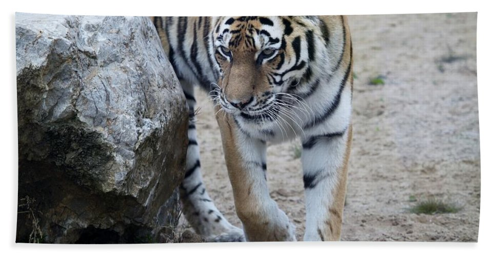 Tiger Hand Towel featuring the photograph Tiger by FL collection
