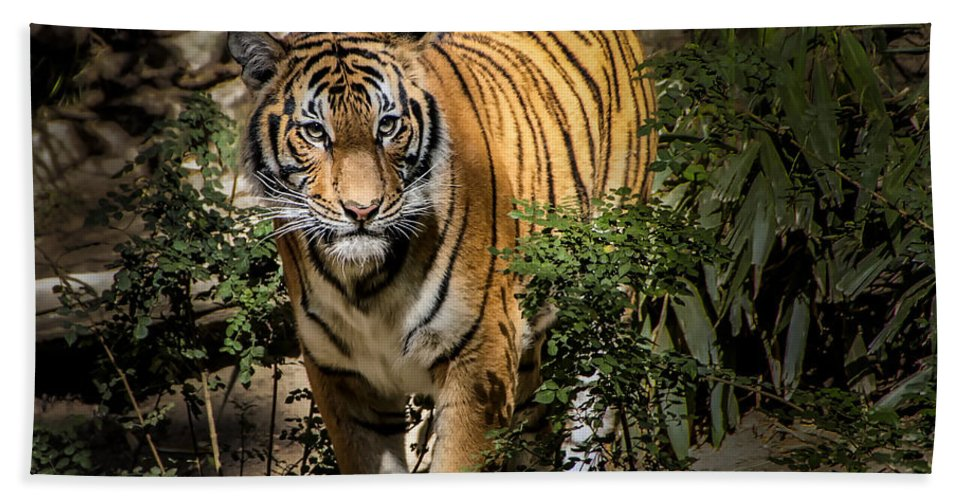 Tiger Bath Sheet featuring the photograph Tiger by Jon Berghoff
