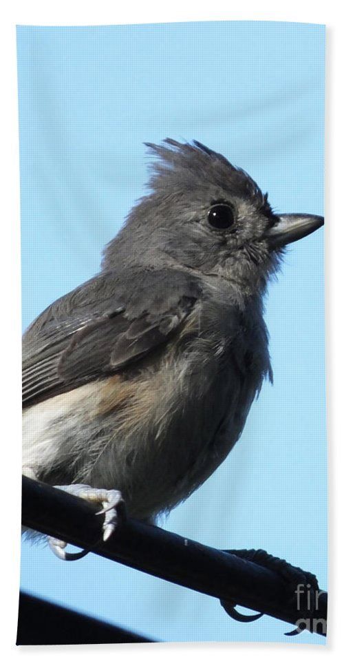 Titmouse Hand Towel featuring the photograph Titmouse by Lizi Beard-Ward
