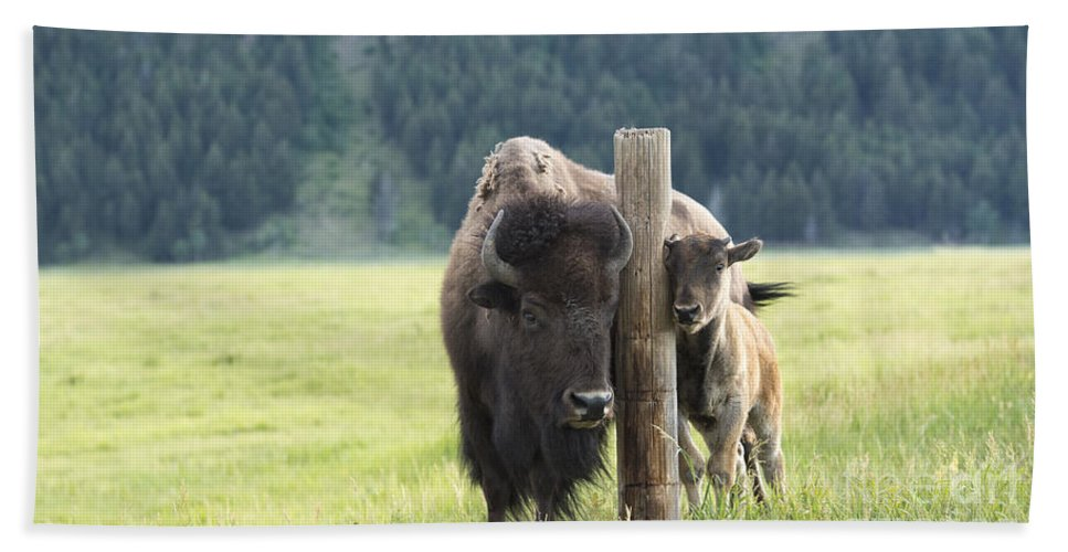 Bison Hand Towel featuring the photograph Togetherness by Sandra Bronstein