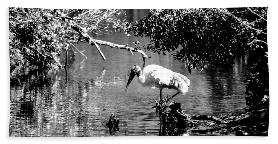 Wood Stork Bath Sheet featuring the photograph Tranquility Bw by Norman Johnson