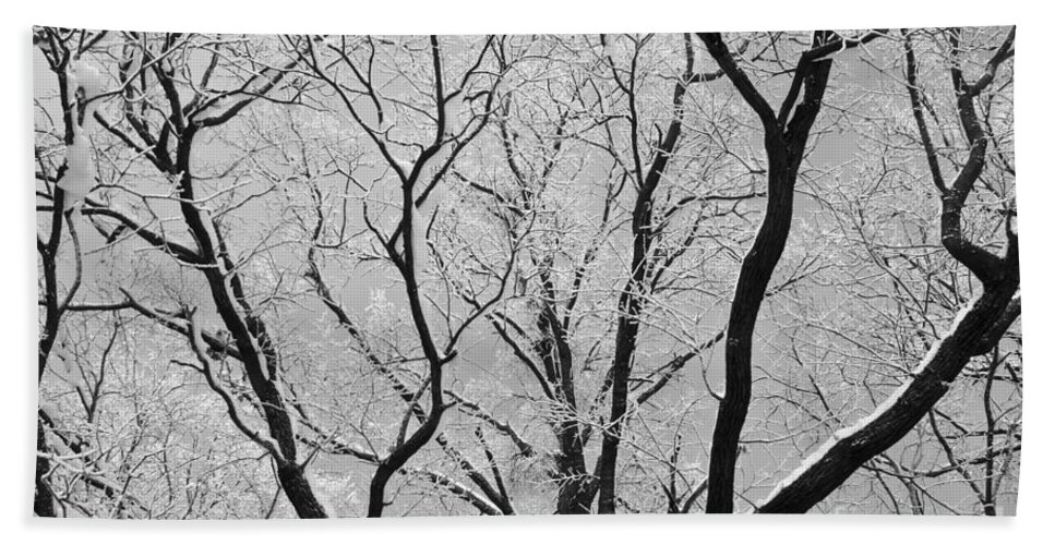 Abstract Bath Sheet featuring the photograph Tree Branches by Dan Radi