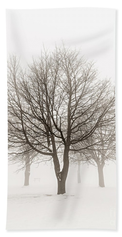 Trees Hand Towel featuring the photograph Trees In Winter Fog by Elena Elisseeva