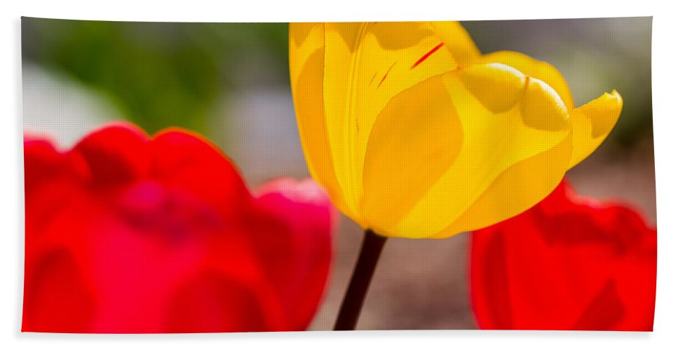 Bloom Hand Towel featuring the photograph Tulips by Gaurav Singh