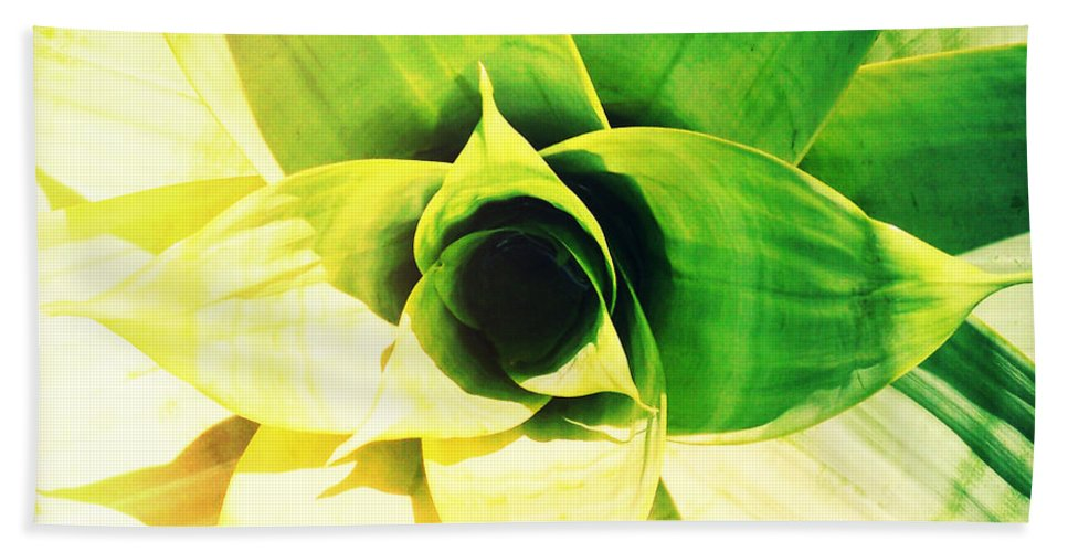 Florida Hand Towel featuring the photograph Tunnel Of Green by Chris Andruskiewicz