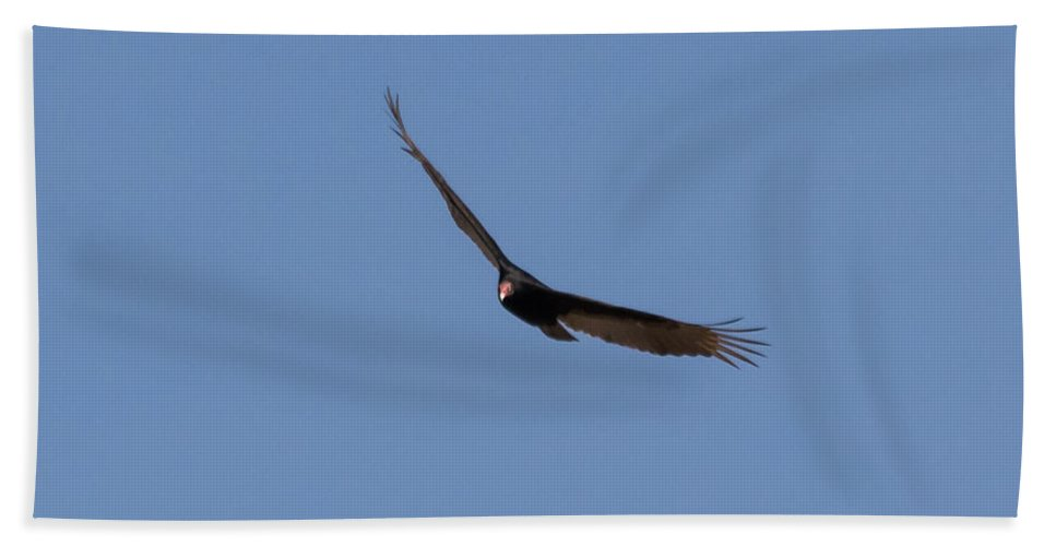 Turkey Hand Towel featuring the photograph Turkey Vulture by Jan M Holden