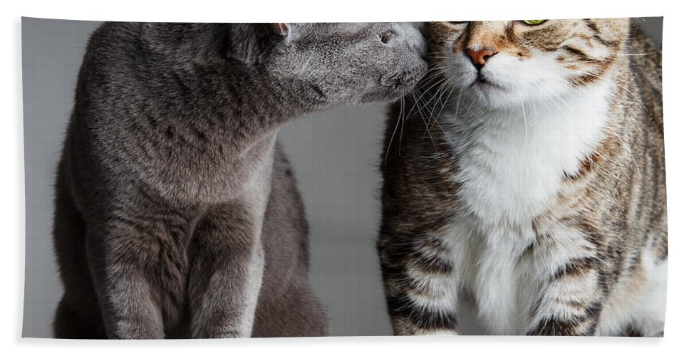 Cat Bath Towel featuring the photograph Two Cats by Nailia Schwarz