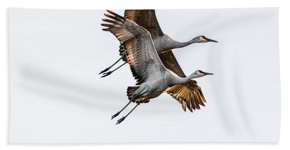 Sandhill Cranes Hand Towel featuring the photograph Two Sandhill Cranes by Michele Wright