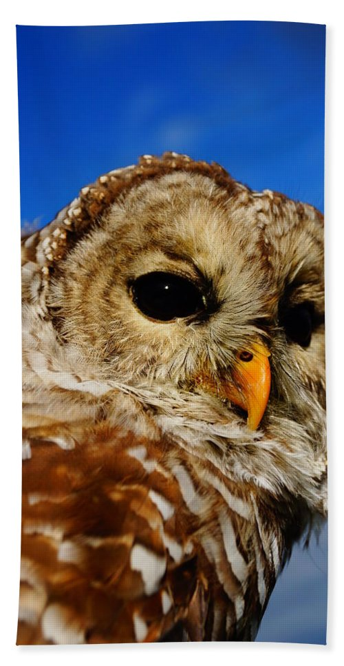 Owls Hand Towel featuring the photograph Up Here by Jeffery L Bowers