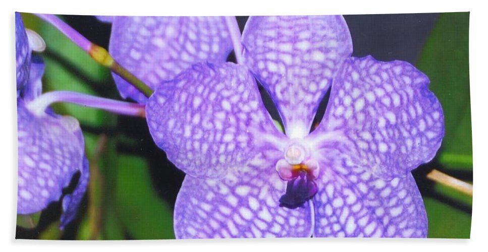 Homegrown Vanda Orchid Hand Towel featuring the photograph Vanda Orchid by Robert Floyd