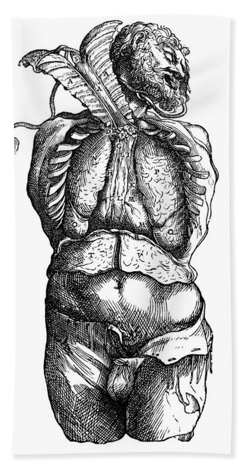 1543 Bath Sheet featuring the photograph Vesalius: Thoracic Cavity by Granger