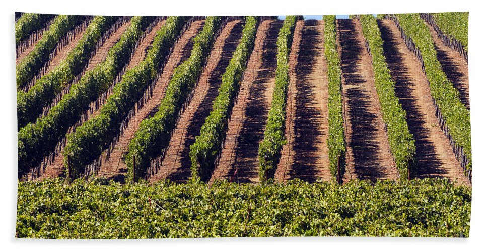 Napa Valley California Wineries Winery Grapevine Grapevines Row Rows Landscape Landscapes Plant Plants Vineyard Vineyards Hand Towel featuring the photograph Vineyard Rows by Bob Phillips