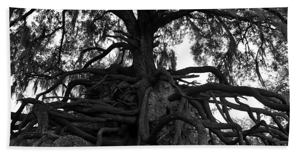 Fine Art Photography Hand Towel featuring the photograph Walking Oak by David Lee Thompson