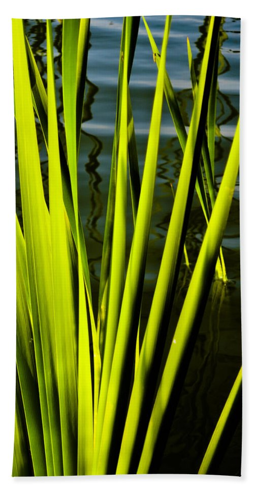 Reed Art Bath Sheet featuring the photograph Water Reeds by David Pyatt