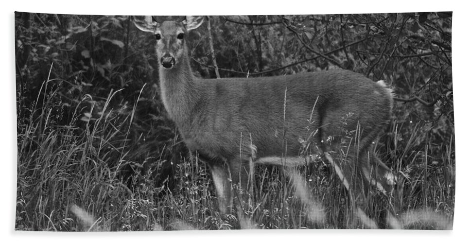 Deer Hand Towel featuring the photograph Well Hello There by Frozen in Time Fine Art Photography