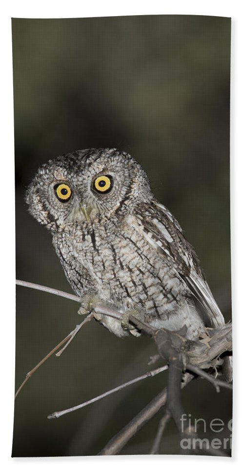 Whiskered Screech Owl Hand Towel featuring the photograph Whiskered Screech Owl by Anthony Mercieca
