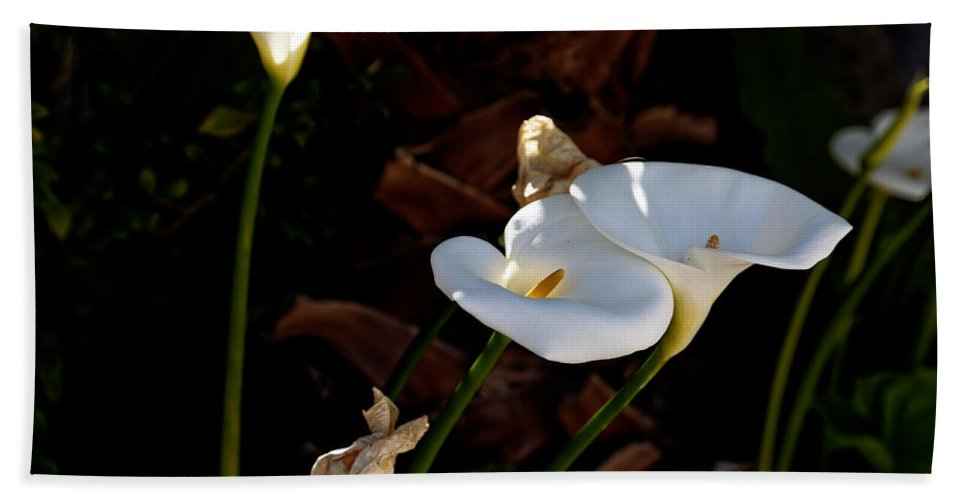 Calla Lilies Hand Towel featuring the photograph White Calla Lilies by Scott Hill