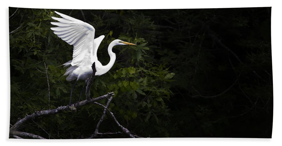 Bird Bath Towel featuring the photograph White Egret's Takeoff by J L Woody Wooden