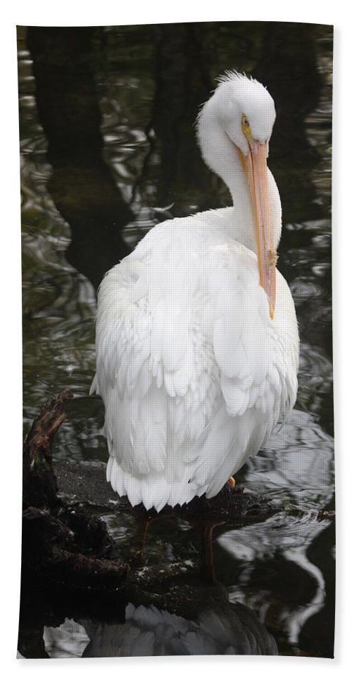 Pelican Bath Sheet featuring the photograph White Pelican by Christiane Schulze Art And Photography