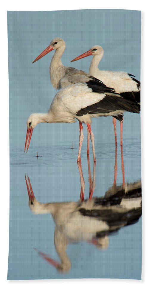 Photography Bath Sheet featuring the photograph White Storks Ciconia Ciconia In A Lake by Panoramic Images