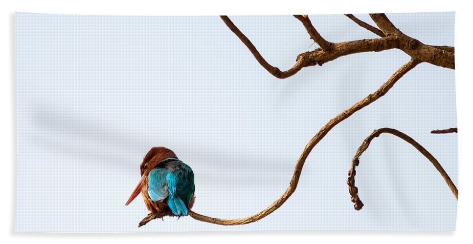 Smyrna Kingfisher Bath Towel featuring the photograph White-throated Kingfisher by Gaurav Singh