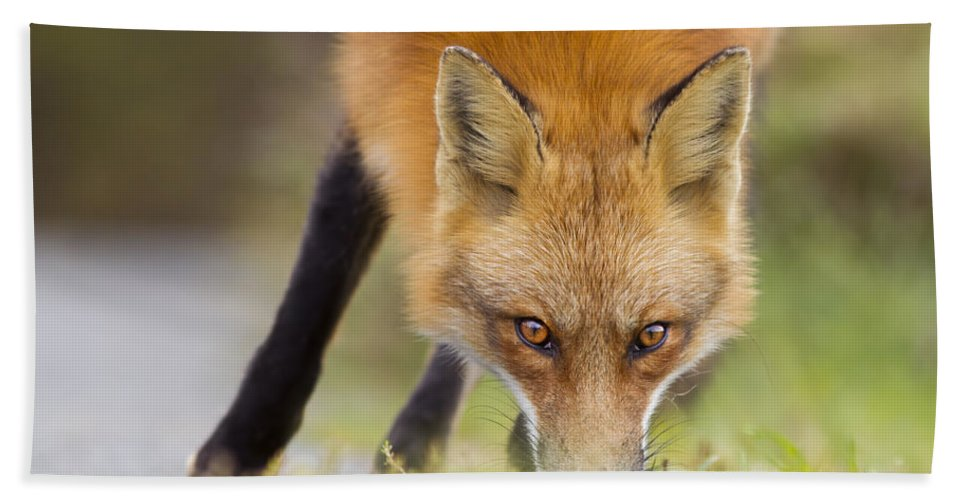 Wild Hand Towel featuring the photograph Wild Eyes by Mircea Costina Photography