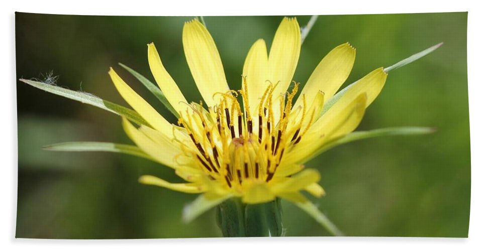 Mccombie Bath Sheet featuring the photograph Wildflower Named Yellow Salsify by J McCombie