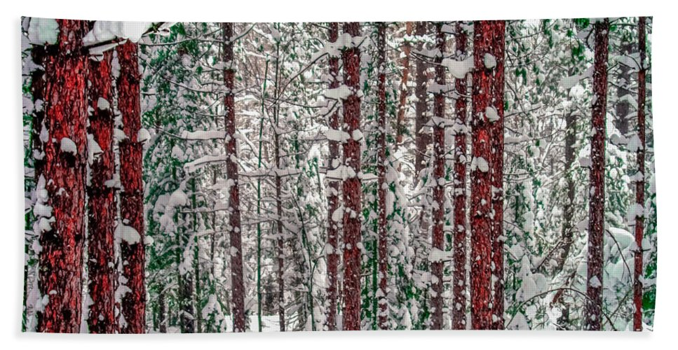 Forest Hand Towel featuring the photograph Winters Forest by Optical Playground By MP Ray