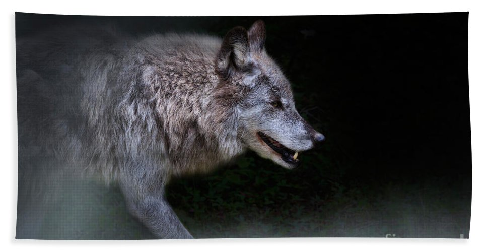 Wolf Hand Towel featuring the photograph Wolf On The Prowl by Louise Heusinkveld