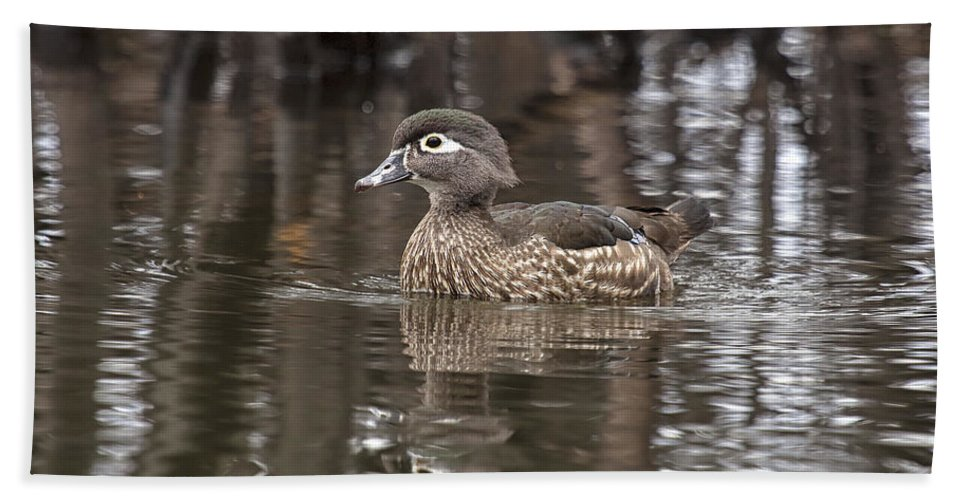 Duck Hand Towel featuring the photograph Wood Duck by Eunice Gibb