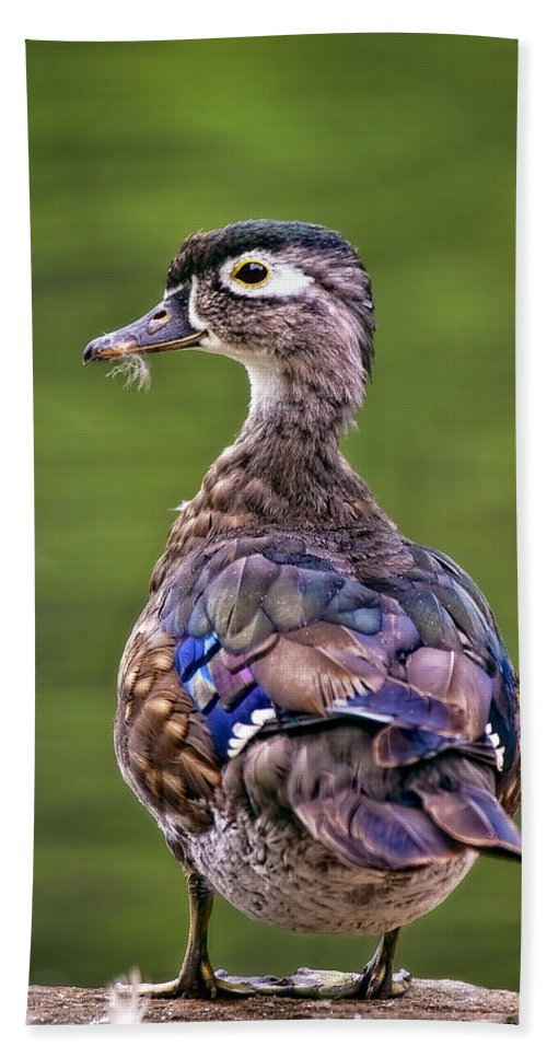 Animal Hand Towel featuring the photograph Wood Duck Juvenile by Marcia Colelli