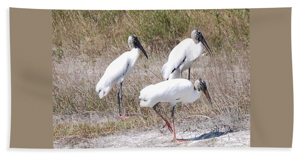 Feeding Together Hand Towel featuring the photograph Wood Storks by Robert Floyd