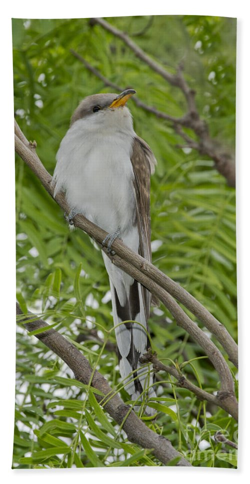 Yellow-billed Cuckoo Hand Towel featuring the photograph Yellow-billed Cuckoo by Anthony Mercieca