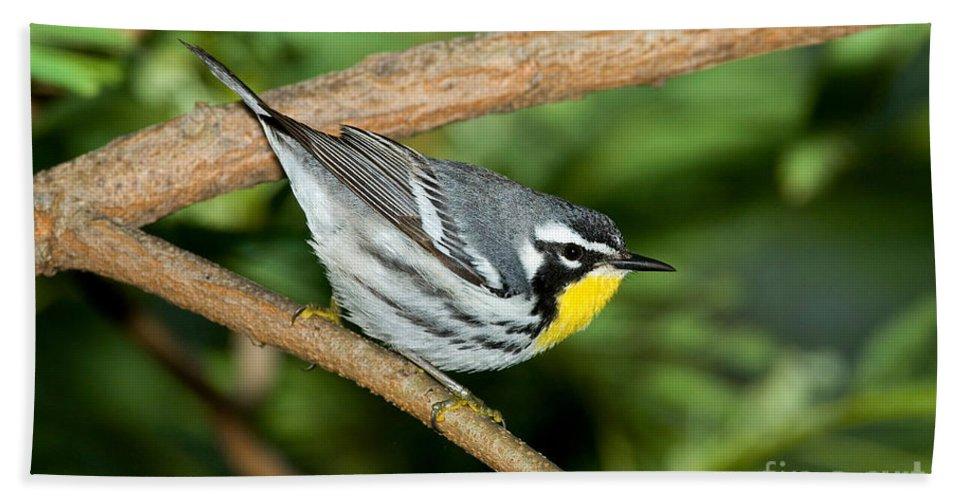 Fauna Hand Towel featuring the photograph Yellow-throated Warbler by Anthony Mercieca