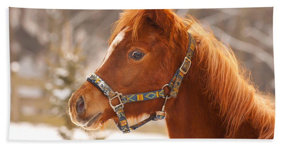 Animal Hand Towel featuring the photograph Young Horse In Winter Day by Jaroslav Frank