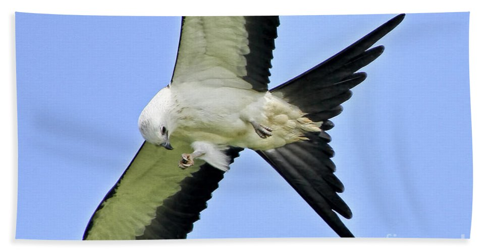 Swallow-tailed Kite Bath Sheet featuring the photograph Young Swallow-tailed Kite by Barbara Bowen