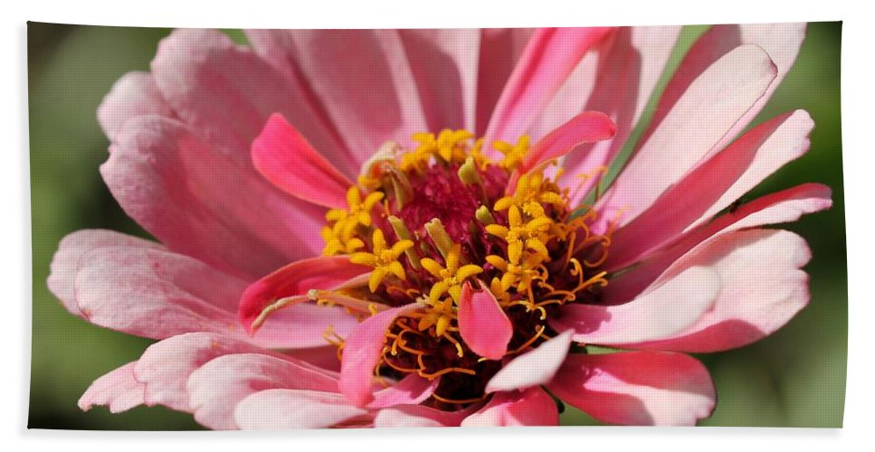 Mccombie Bath Sheet featuring the photograph Zinnia From The Whirlygig Mix by J McCombie