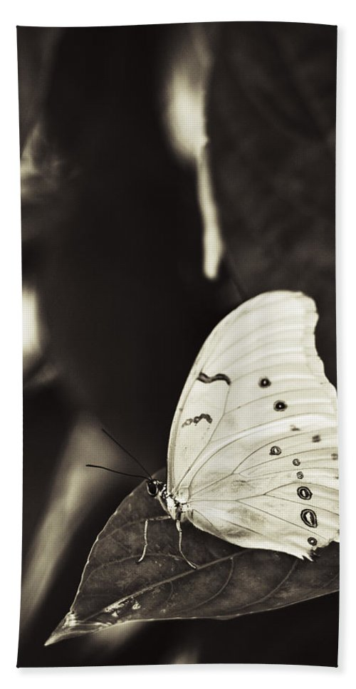 Butterfly Bath Sheet featuring the photograph Butterfly by Bradley R Youngberg