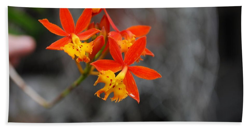 Circus Hand Towel featuring the photograph Orchid by Robert Floyd