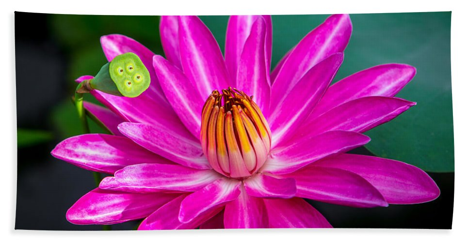 Flowers Hand Towel featuring the photograph Water Lily by Dennis Goodman