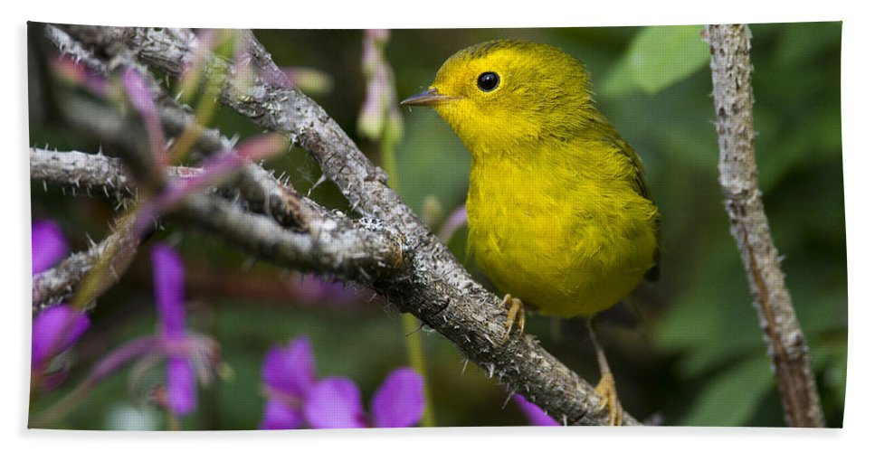 Doug Lloyd Hand Towel featuring the photograph Wilsons Warbler by Doug Lloyd