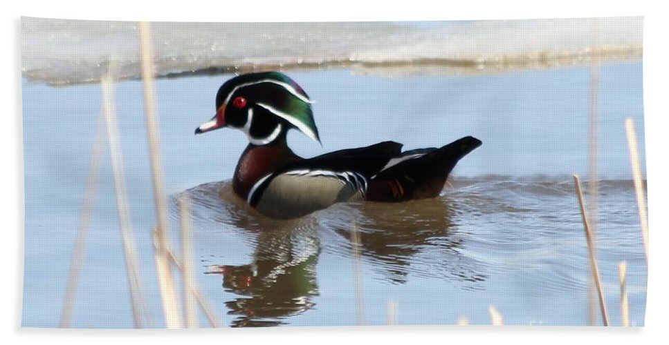 Wood Duck Bath Sheet featuring the photograph Wood Duck by Lori Tordsen