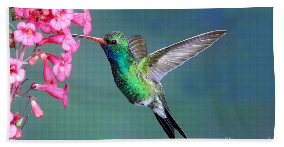 Animal Hand Towel featuring the photograph Broad-billed Hummingbird by Anthony Mercieca