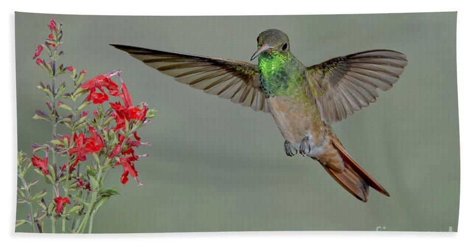Buff-bellied Hummingbird Hand Towel featuring the photograph Buff-bellied Hummingbird by Anthony Mercieca