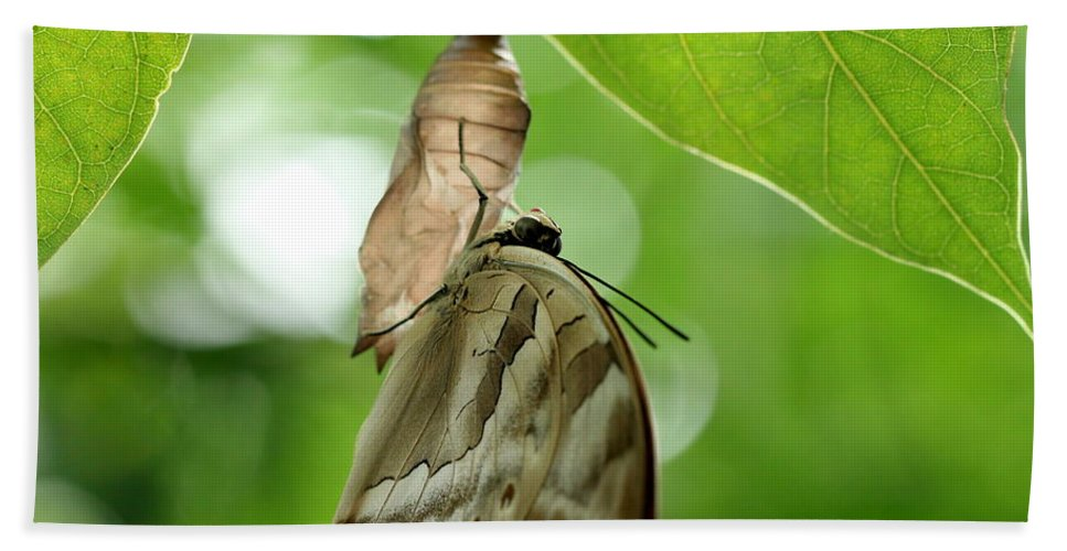 Butterfly Bath Sheet featuring the photograph Butterfly by Heike Hultsch