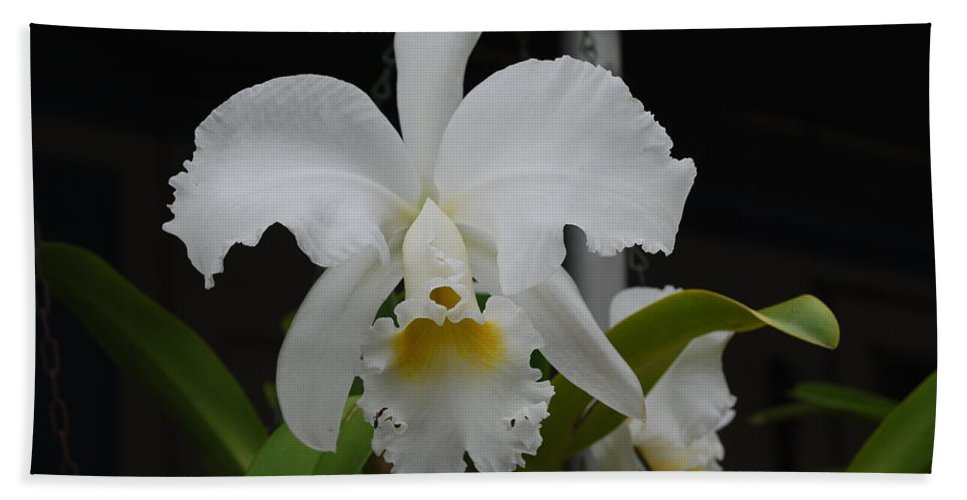 Catala Hand Towel featuring the photograph Orchid by Robert Floyd