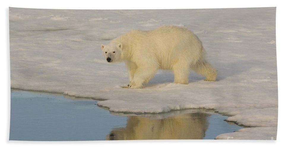 Polar Bear Hand Towel featuring the photograph Polar Bear Walking On Ice by John Shaw