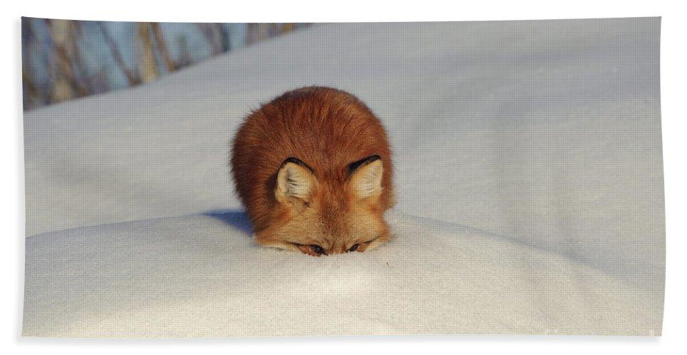Minnesota Fauna Bath Sheet featuring the photograph Red Fox by John Shaw