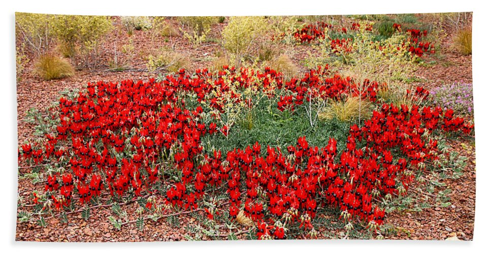 Sturts Desert Pea Hand Towel featuring the photograph Sturt's Desert Pea Outback South Australia by Carole-Anne Fooks