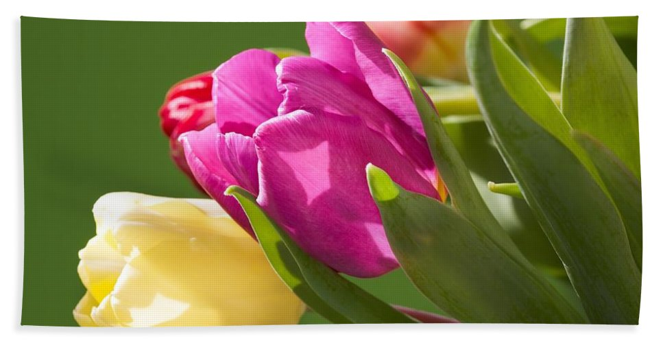 Flower Hand Towel featuring the photograph Tulips by FL collection